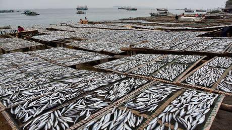 Prohibicion-pesca-china