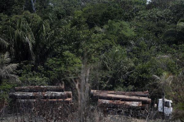 Plantean prohibir deforestación en la Amazonía brasileña durante cinco años