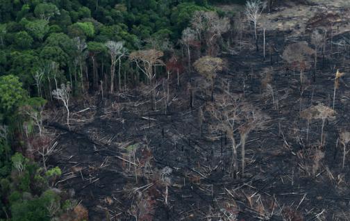 El Amazonas puede convertirse en un ecosistema tipo sabana
