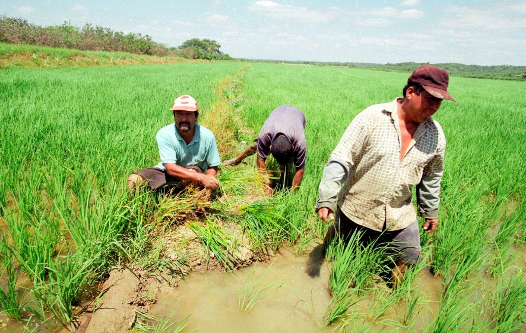 Producción en La zona costera colombiana es apoyada por la FAO y UE