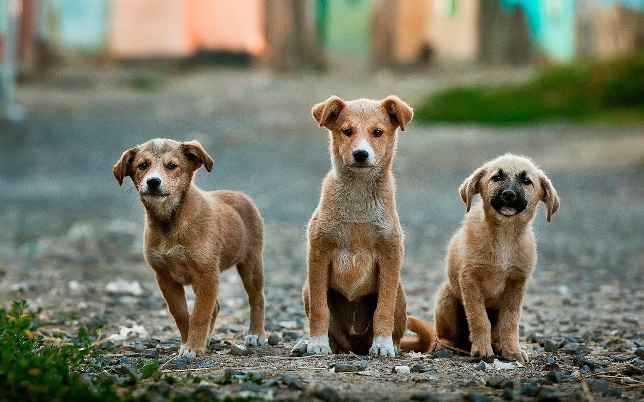 Tres fundaciones de animales a las que puede ayudar