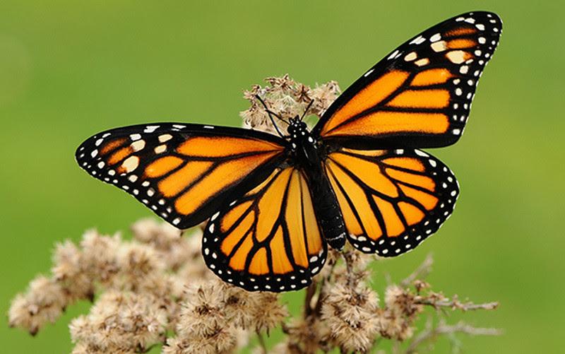 Declive de insectos ¿la sexta extinción masiva?