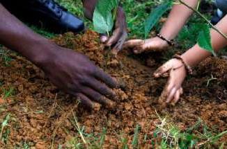 La @CiudadManizales a través de un programa, espera sembrar árboles en la zona rural la ciudad