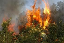 Fuerte incendio forestal en El cerrito, Valle del Cauca