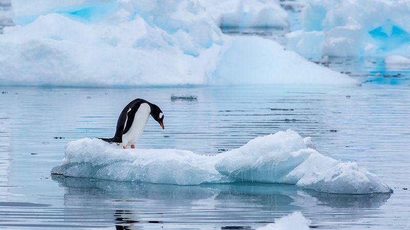 Antártida: ¿qué países reclaman su soberanía y por qué?