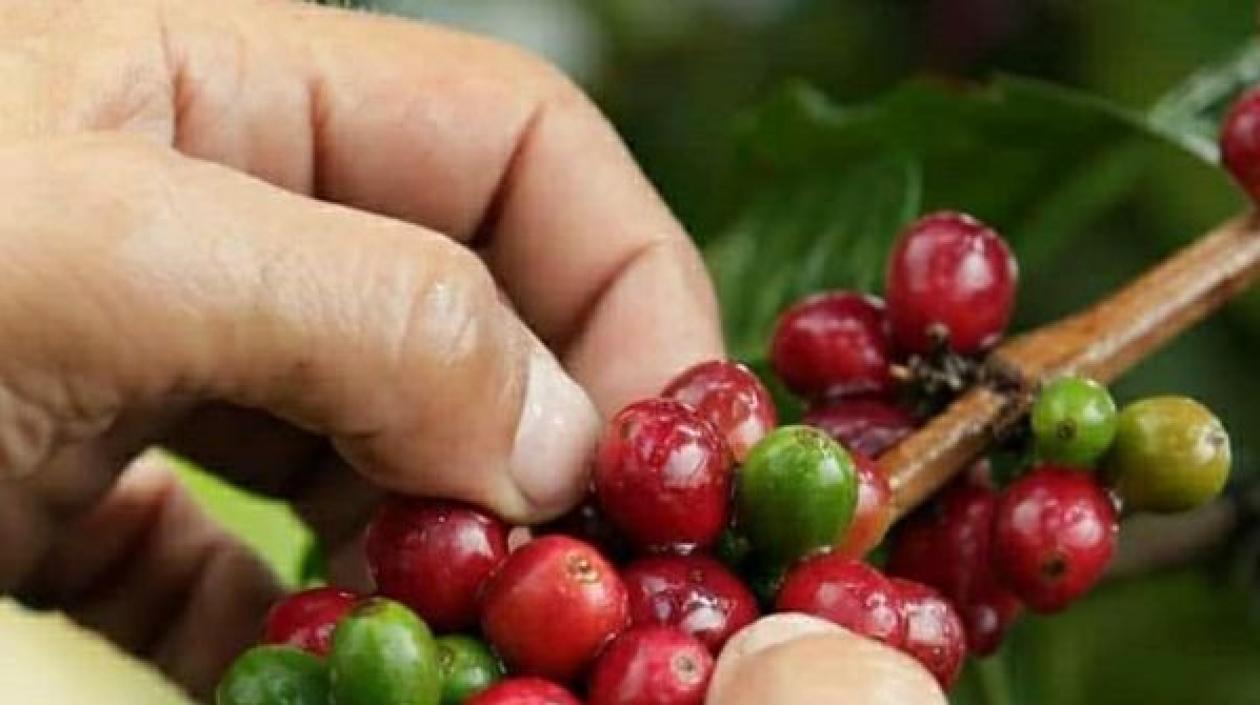 Producción de café de Colombia bajó 6% en 2020, a 13,9 millones de sacos