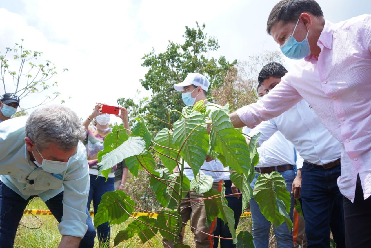 Proyecto Recuperación de Suelos Degradados – Bajo Cauca EPM