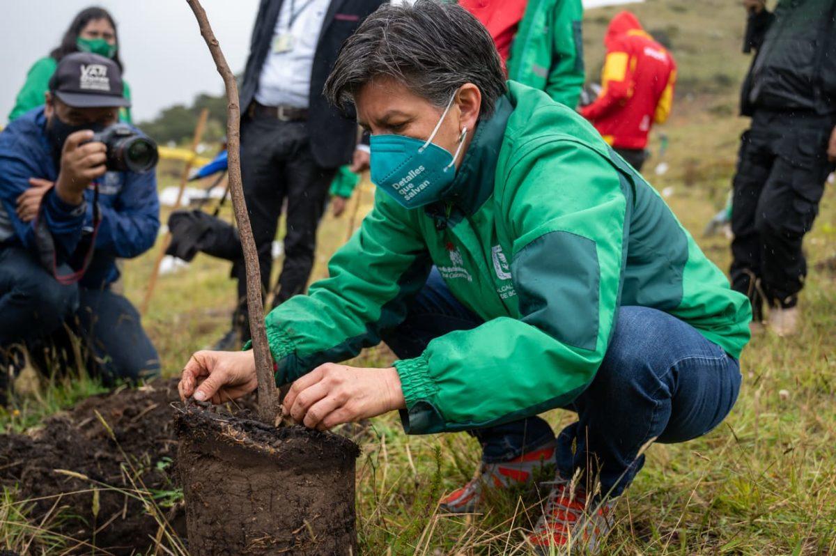 Alcaldesa lanza esquema 5×1 de plantación. ¡10.000 nuevos árboles para Bogotá! – @Bogota
