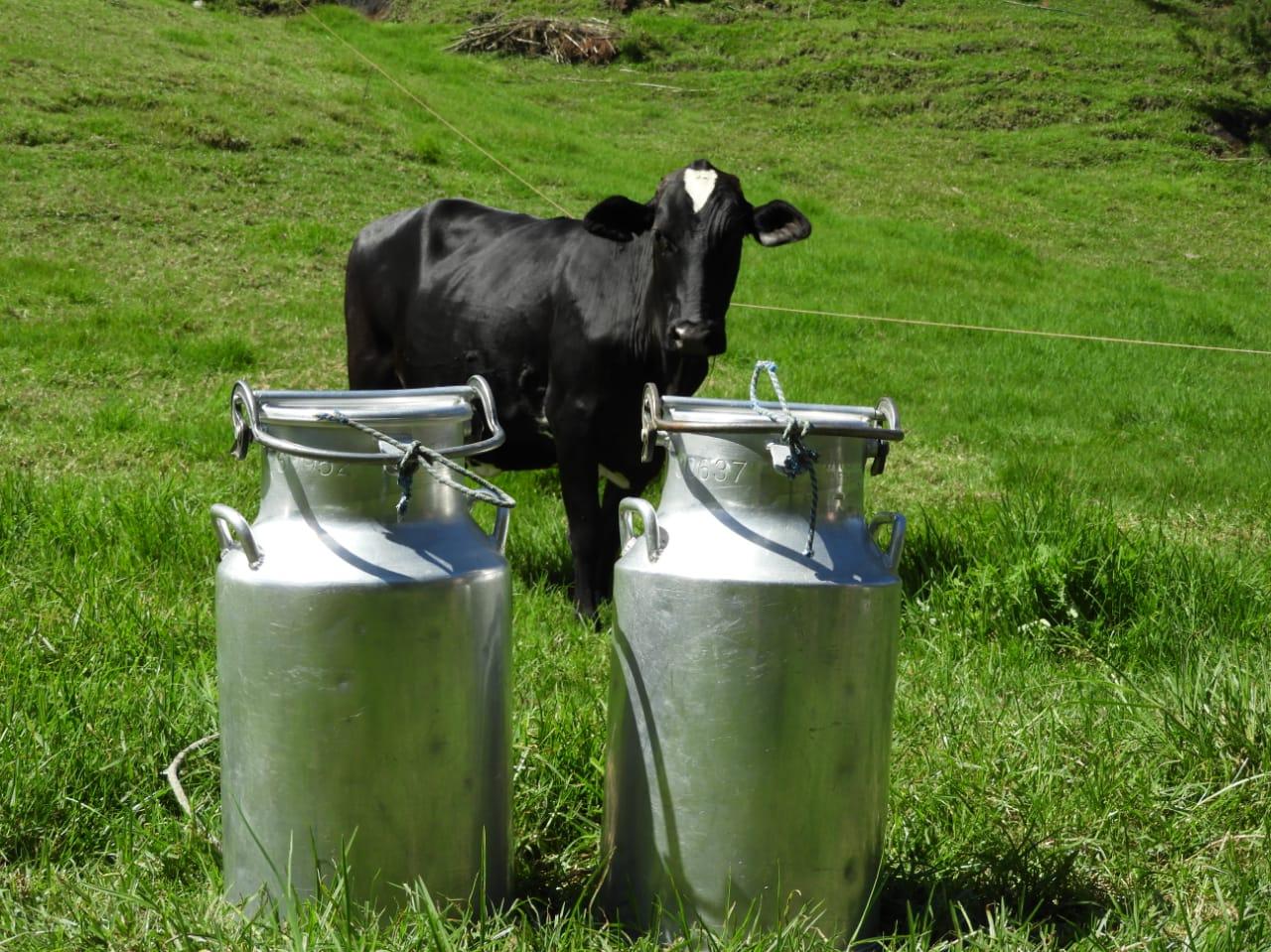 Antioquia busca alternativas para evitar pérdida de más de 2 millones de litros de leche