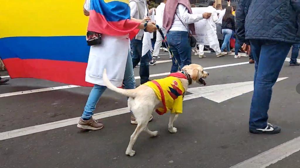 Ni los animales se han salvado de las jornadas de protesta en Colombia