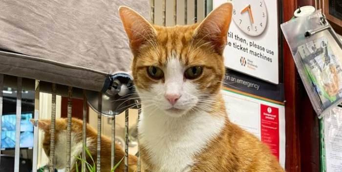Un gato consigue trabajo como cazador jefe de ratones