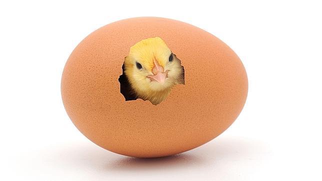 El elevado precio del pollo y huevos se mantendrá  por más de un año en Colombia