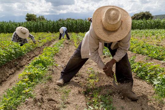 Solo el 4% de las hectáreas cultivadas en Colombia son aseguradas
