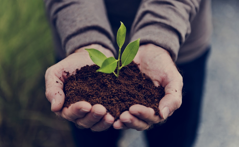 Brother Earth la iniciativa de Brother International Corporation para contribuir con la preservación del medio ambiente en todo el mundo