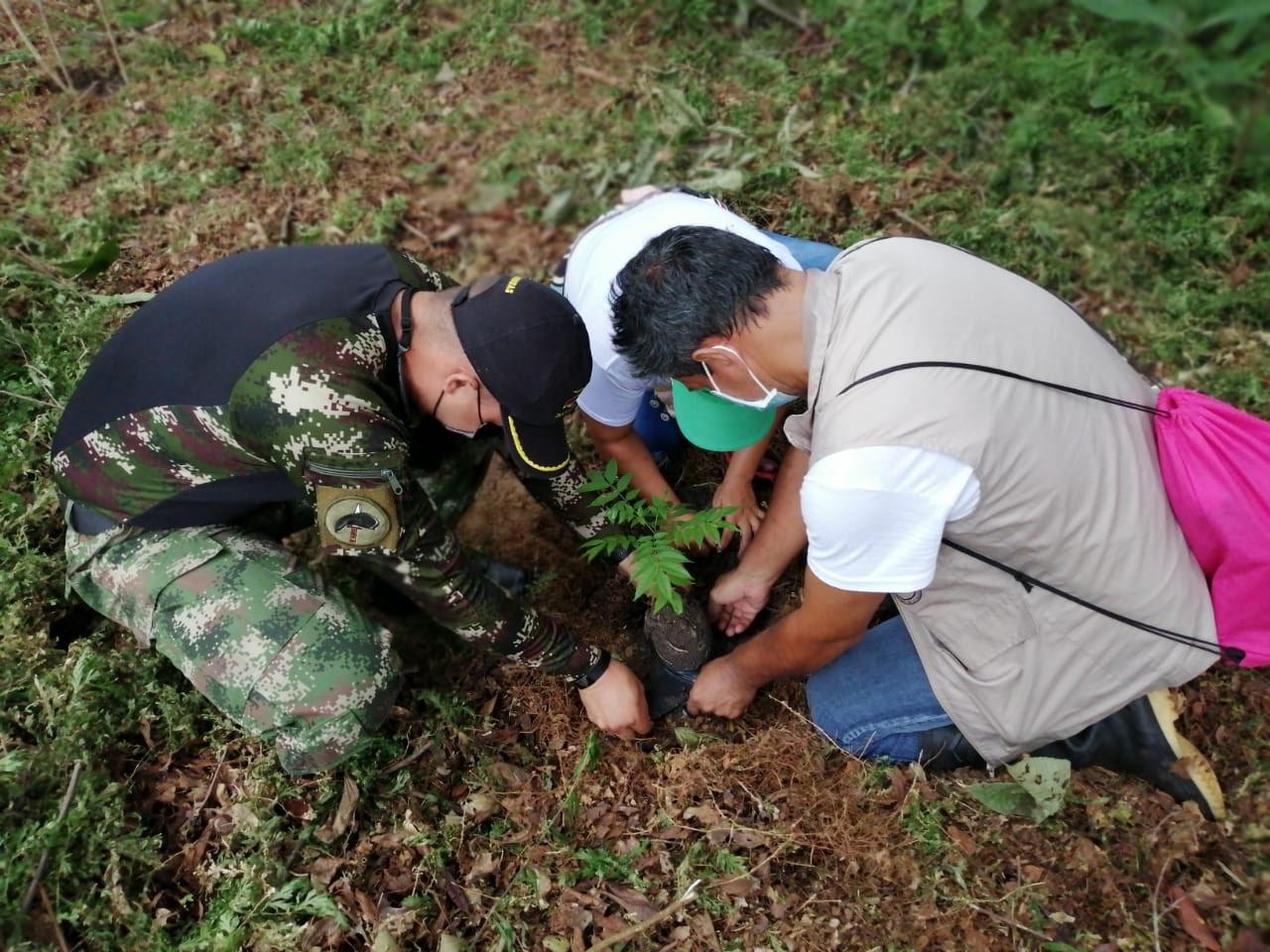 Grandes personalidades ambientales se suman a la siembra de árboles para recuperar el Amazonas