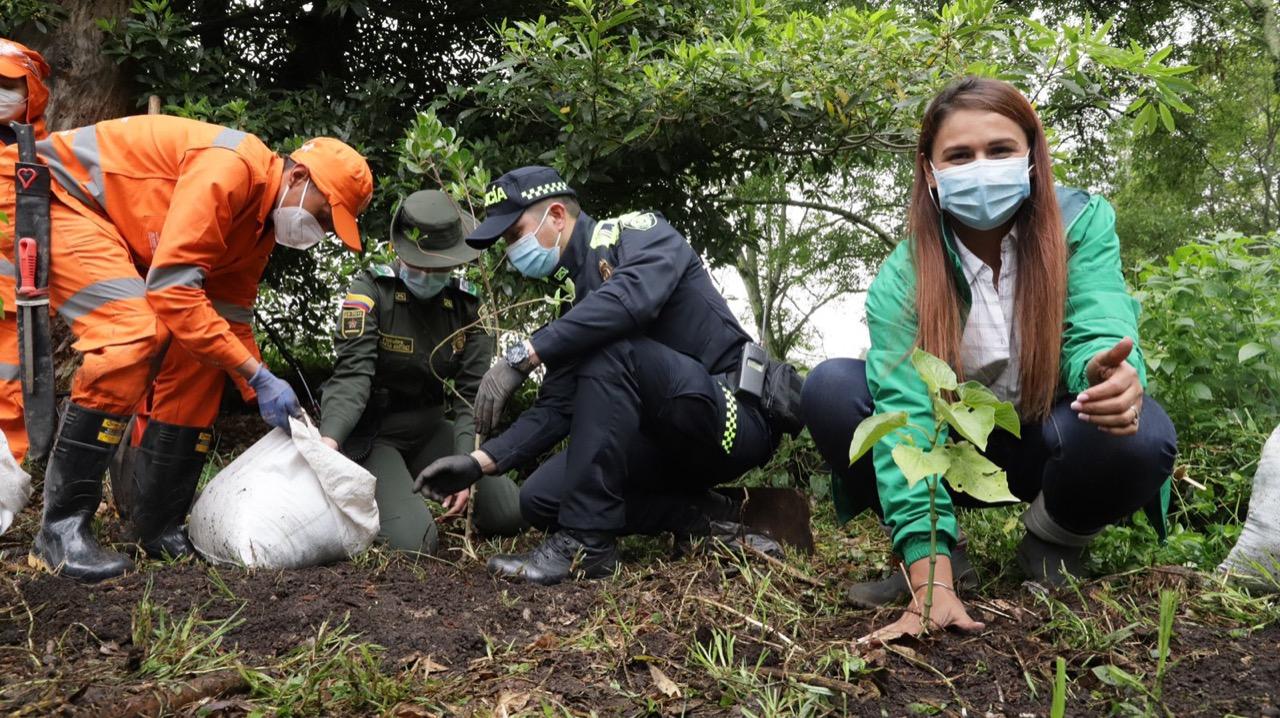 En el Día Mundial del Árbol, Bogotá reverdece con nuevos árboles plantados – @bogota